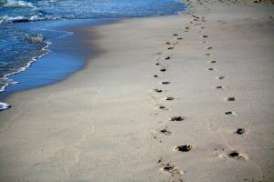 Footprints in sand & sea