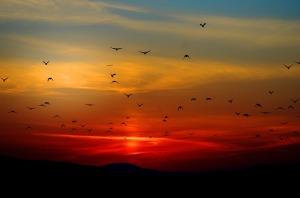 Sunset with birds (Pixabay)