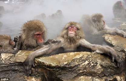 Japanese Snow Monkey_634x409