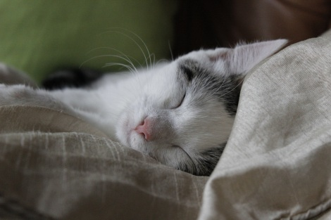 cat sleeping (Pixabay)