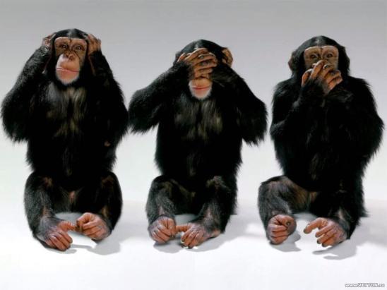 Three Monkeys (Flickr)
