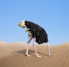 Ostrich head in sand (Shutterstock)