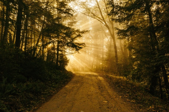 Sunbeam forest road (Pixabay)